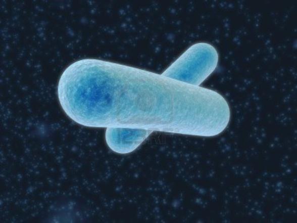 588x441x660257-bacteria-1024x768.jpg.pagespeed.ic.70thWnFV-d